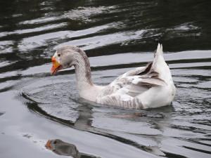 Francis pond