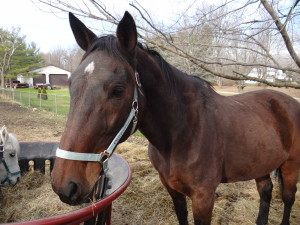 Princeton is our featured horse!