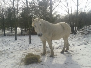 Butch is our featured horse!