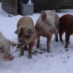 Man! Tables Filling Up Like Our Pig Yard at Feeding Time