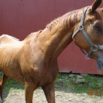 Happy Trails Assists Portage APL in Mass Rescue of More Than 120 Animals