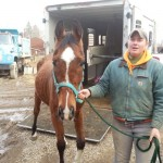 Happy Trails Assists in Yet Another Neglect Case in Summit County