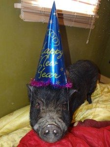 Happy New Year from Hershey, our featured animal!