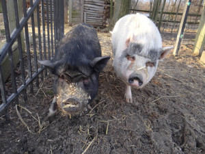 Let's Fins Petunia and Pandy a Home!