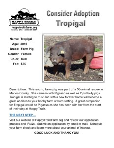 flier-tropigal1