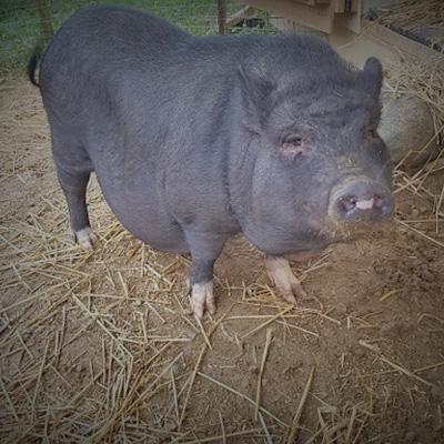 Happy Trails Farm Animal Sanctuary | Happy Trails Farm Animal