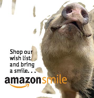 Piggies Happy Trails Farm Animal Sanctuary